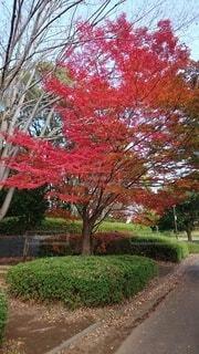 木の前にある植物の写真・画像素材[4872475]