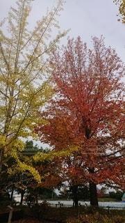 木のクローズアップの写真・画像素材[4872482]