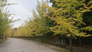 道路の脇にある木の写真・画像素材[4872481]