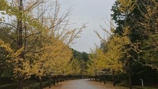森の中の木の写真・画像素材[4872479]