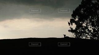 暗い空の木の写真・画像素材[4872485]
