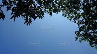 木の隣にあるヤシの木の群の写真・画像素材[4872490]