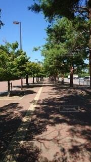 木からぶら下がっている信号機の写真・画像素材[4872499]