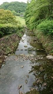 川の側の木の写真・画像素材[4872500]