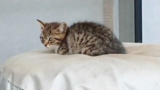 ベッドに横たわる猫の写真・画像素材[4873743]