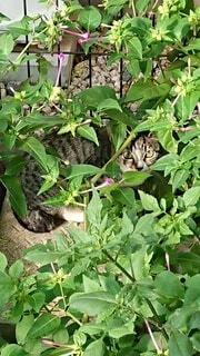 庭の緑の植物の上に座っている猫の写真・画像素材[4873757]