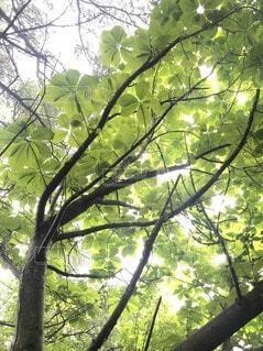 木を下から見上げるの写真・画像素材[4872604]