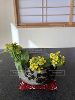 菜の花の写真・画像素材[4872632]