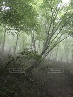霧の森の写真・画像素材[4874230]