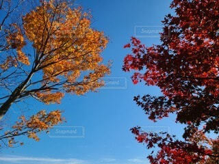 秋空の写真・画像素材[4872610]