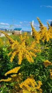 道端の花の写真・画像素材[4939164]