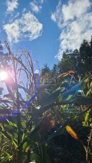 秋の枯れ草と空の写真・画像素材[4939165]