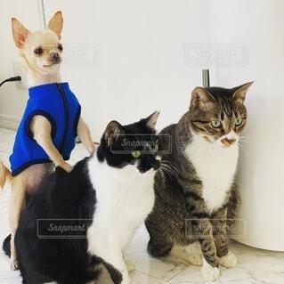 犬の隣に座っている猫の写真・画像素材[4872786]