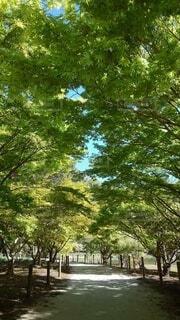 木漏れ日の写真・画像素材[4872801]