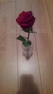 薔薇の写真・画像素材[4876189]