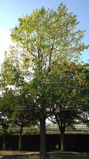 木のクローズアップの写真・画像素材[4895396]