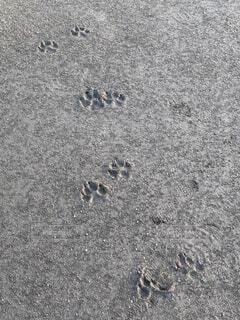 散歩の軌跡の写真・画像素材[4890026]