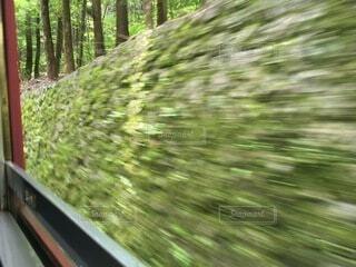 森の中を走る列車の写真・画像素材[4874116]