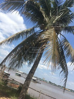ヤシの木のあるビーチの写真・画像素材[4874882]