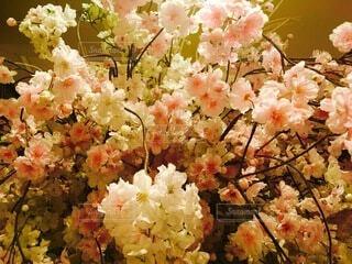花のクローズアップの写真・画像素材[4874907]