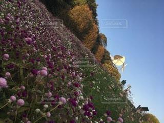 花園の近くの写真・画像素材[4874909]