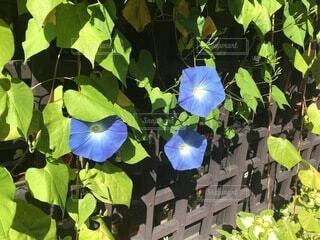 花のクローズアップの写真・画像素材[4874916]