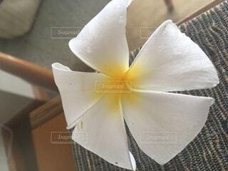 花のクローズアップの写真・画像素材[4874934]