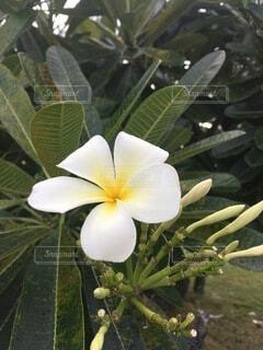 花のクローズアップの写真・画像素材[4874935]