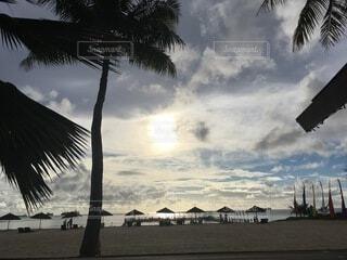 ヤシの木のある浜辺の人々のグループの写真・画像素材[4874936]