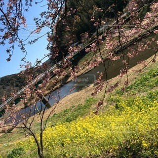 木の隣の丘の中腹の近くの写真・画像素材[4874940]