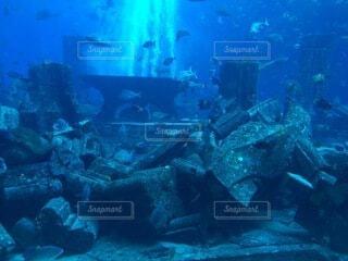 魚の写真・画像素材[4874954]
