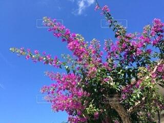植物の上のピンクの花の写真・画像素材[4874962]
