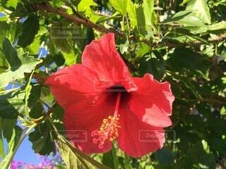 花のクローズアップの写真・画像素材[4874958]