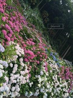 花園の近くの写真・画像素材[4874959]