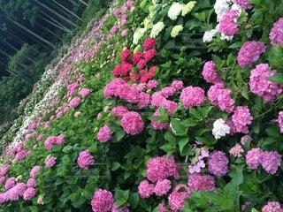 植物の上のピンクの花の写真・画像素材[4874967]