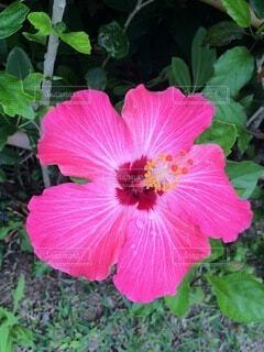 花のクローズアップの写真・画像素材[4874963]