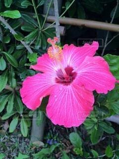 植物の上のピンクの花の写真・画像素材[4874964]