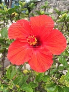 花のクローズアップの写真・画像素材[4874969]