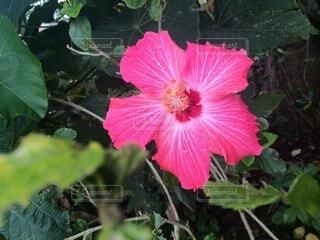 植物の上のピンクの花の写真・画像素材[4874965]