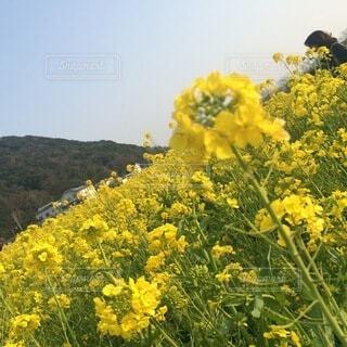 花のクローズアップの写真・画像素材[4874971]