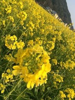 花のクローズアップの写真・画像素材[4874973]