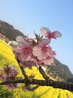 花のクローズアップの写真・画像素材[4874976]