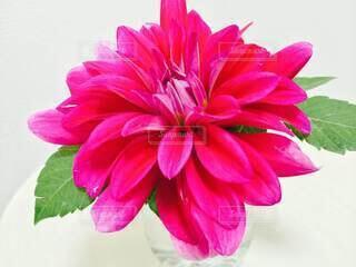 ピンクの花で満たされた花瓶の写真・画像素材[4874975]