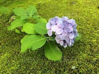 緑の植物のクローズアップの写真・画像素材[4874984]