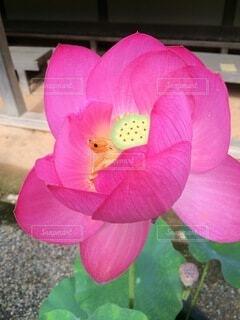植物の上のピンクの花の写真・画像素材[4874981]