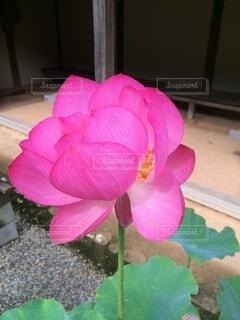 花のクローズアップの写真・画像素材[4874983]
