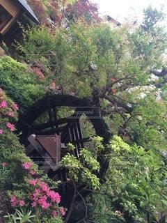 花園の近くの写真・画像素材[4874990]