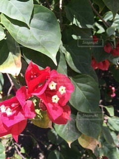 花のクローズアップの写真・画像素材[4874989]