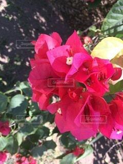 花のクローズアップの写真・画像素材[4874991]