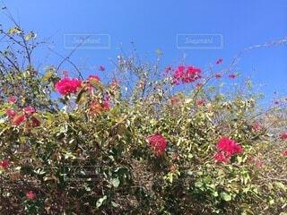 畑の色とりどりの花のグループの写真・画像素材[4874993]